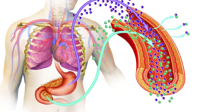 diabetes type 1170x650 - Types Of Diabetes - How To Ascertain?